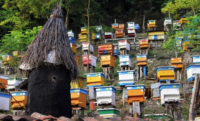 bee houses in the countryside